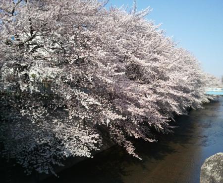 2012-04-08sasura.jpg