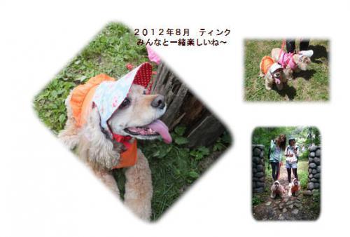 20120809八ヶ岳ティンク