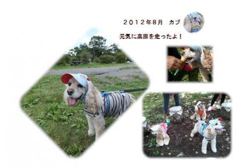 20120809八ヶ岳カブ