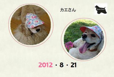 20120821カエさん3