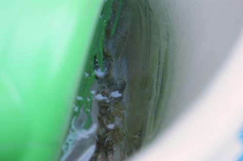20110131fuyu1