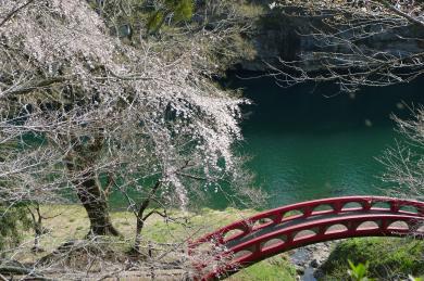 桜淵公園12