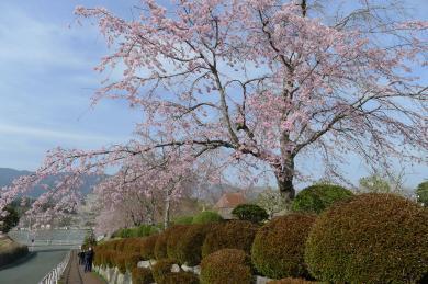 桜淵公園15