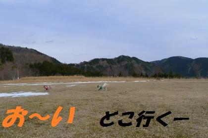 cy506.jpg