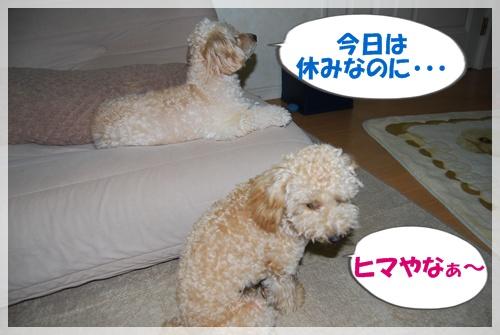 DSC_620.jpg