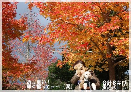 DSC_888.jpg