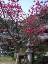 今宮神社1