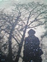 2011年 桜2