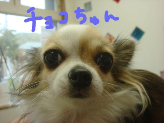 DSC010041.jpg