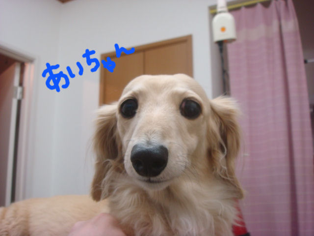 DSC011511.jpg