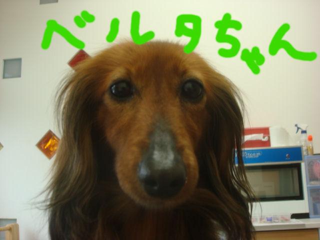 DSC097221.jpg