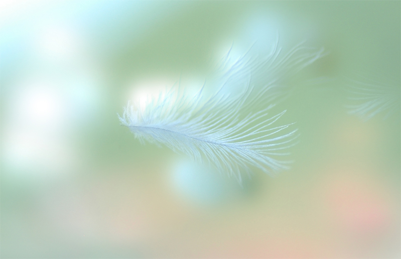 feather1.jpg