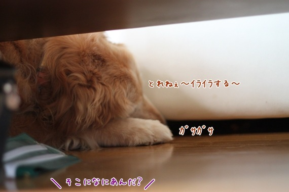 IMG_4992.jpg