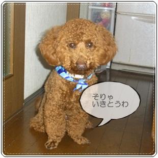 2011_0308_185210-R1008404.jpg