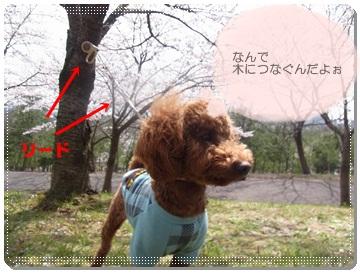 2011_0410_131524-R1008790.jpg
