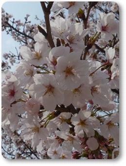 2011_0411_134456-P1020524.jpg