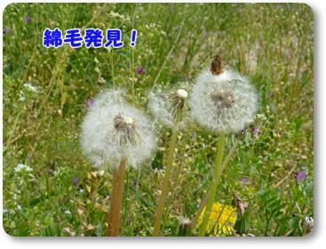 2011_0411_140214-P1020533.jpg