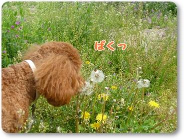 2011_0411_140222-P1020534.jpg