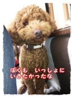 2011_0502_140040-DVC00583.jpg