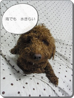 2011_0527_153832-R0010078.jpg