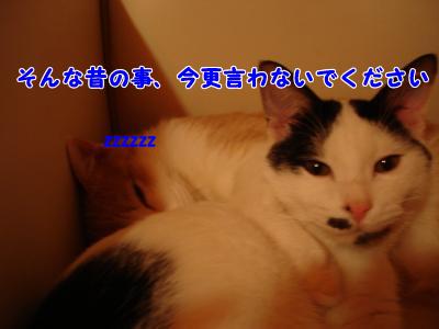 001+(2)_convert_20100323014830.png