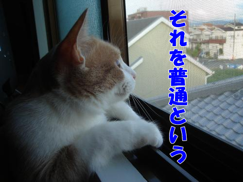 縺上▲縺阪・-s_convert_20100805210110