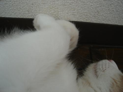繧ゅ・・棒convert_20100817211443