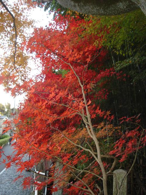 驤エ・狙convert_20101127202419
