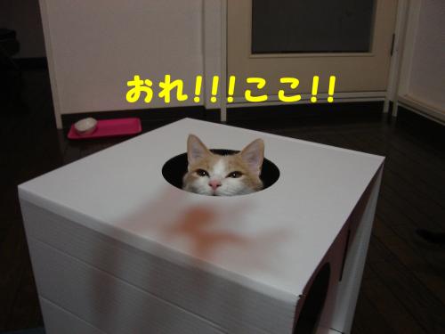 辷ェ縺ィ縺趣シ・-+繧ウ繝斐・_convert_20101129223753