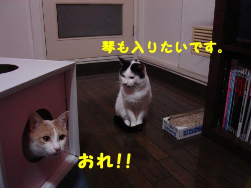 辷ェ縺ィ縺趣シ・-+繧ウ繝斐・_convert_20101129224140