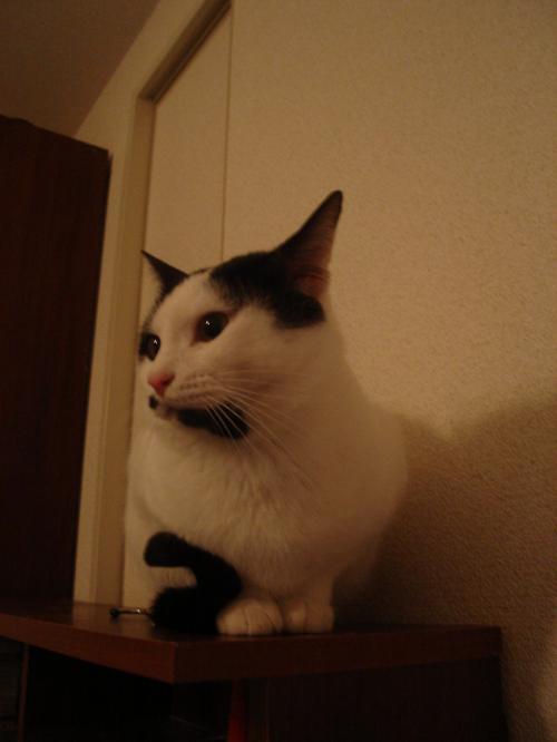 繧薙・・狙convert_20110212181022
