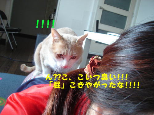 陬上・鬘費シ胆convert_20110216185339