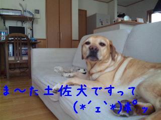 DVC00334_20110609095356.jpg