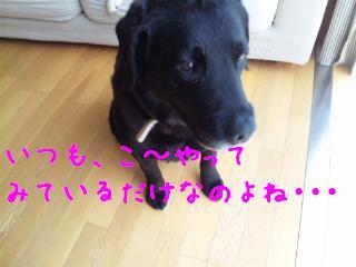 DVC00344_20110610135812.jpg