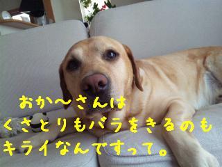 DVC00351_20110610135812.jpg