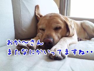 DVC00360_20110611085250.jpg