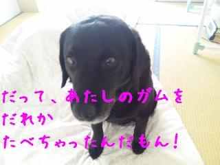 DVC00385_20110620110236.jpg