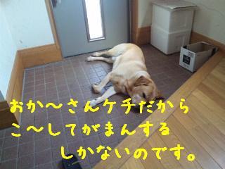 DVC00388.jpg