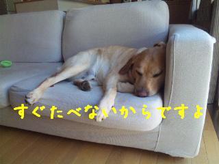 DVC00390_20110620110236.jpg