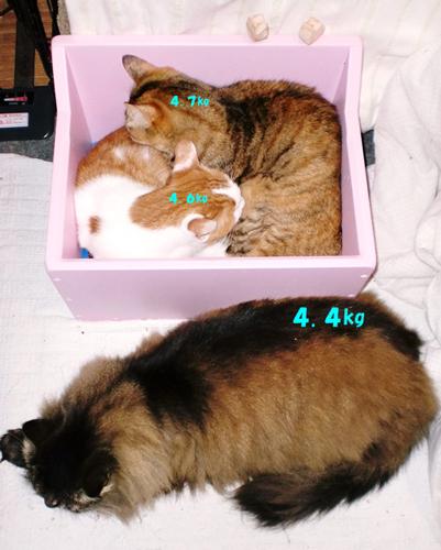 猫3匹-2