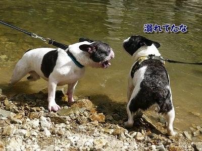 溺れてる? (2)