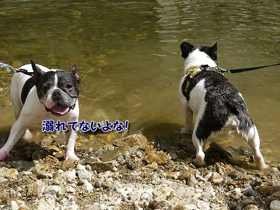 溺れてる? (4)