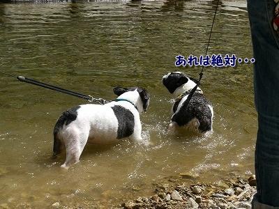 溺れてる? (5)