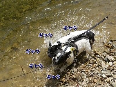 溺れてる? (6)