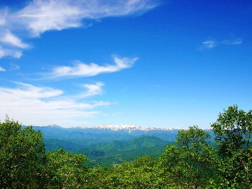 新緑のたかつえ山頂付近