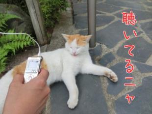 猫ちゃんも聴いてるニャン。