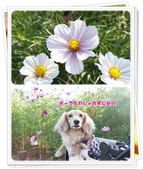 crea141021-5.jpg