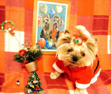 クリスマスグーたん