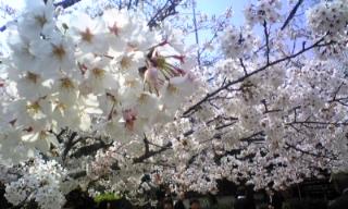 箱根 塔の澤