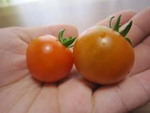 朝から晩まで ありがとうで 愛いっぱい☆-tomato